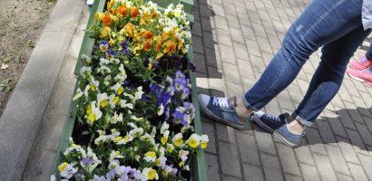 Kwiatki dla Kulturalnej Rabatki