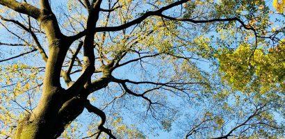 Webinarium: Sieć Przyjaciół Drzew – jak możemy interweniować na rzecz drzew i wspierać się w tym temacie?
