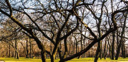 """Webinarium: """"Interwencja na rzecz ochrony drzew. Najczęściej zadawane pytania"""""""